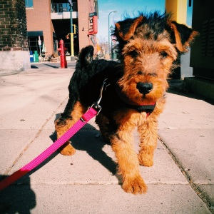 Monty: little dog, big city